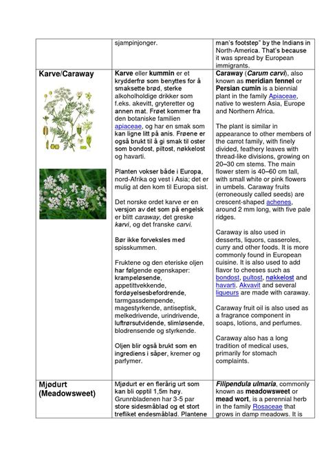 Herbs and aromatic plants book by edytatg - Issuu