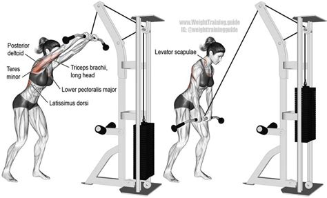 Cable straight-arm pull-down | Cable workout, Chest